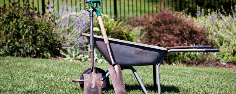 Nurturing grass growth deters weeds