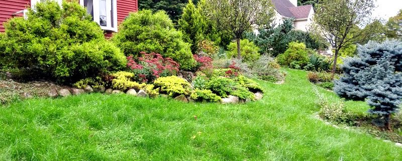Follow different practices for an ecofriendly lawn